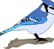 Blue Jay Bird by Krista Casal
