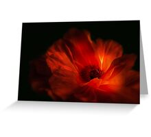 Mohnblüte bei Nacht - Poppy flower at night Greeting Card