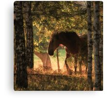 The horse and the sunset Canvas Print