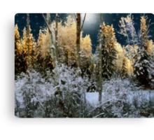 Starshine on a Snowy Wood Canvas Print