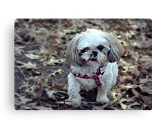 Out for a walk in the park Canvas Print