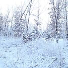 snow snow SNOW!!!!!!!!!!!!!!!! by Eric langley