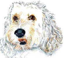 White Labraoodle Maggie by Yvonne Carter
