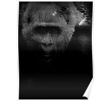 Gorilla Reflection Poster