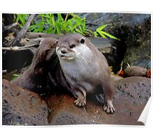 Scratching Otter Poster