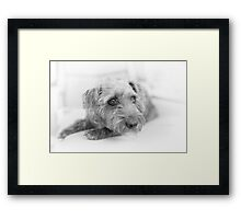 Cute Pup on Watch Framed Print