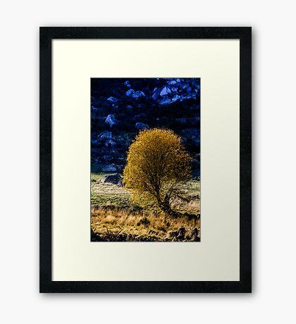Shining in winter Framed Print