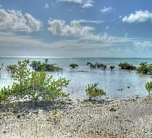 St Andrews Beach at Yamacraw on Eastern Nassau in The Bahamas by 242Digital