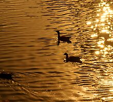 On Golden Pond by Bevlea Ross