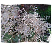 Fluttering seeds Poster