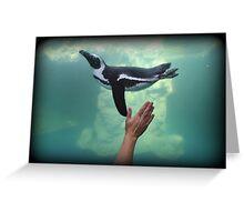 Penguin Toss Greeting Card