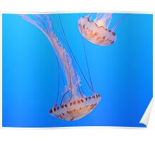 2 Jelly Fish Poster