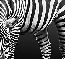 Zebra: Patterns in Nature by Rustyoldtown