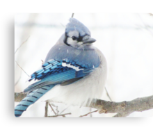 Winter Blue Puff Metal Print