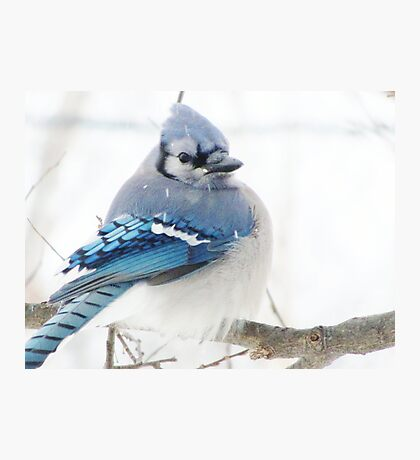Winter Blue Puff Photographic Print