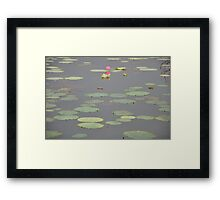 Lily, Margaret River, NT, Nov 2012. Framed Print