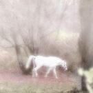 Pippin's dream white horse fantasy by Marianne Campolongo
