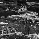 Darebin Creek by Anthony Cook