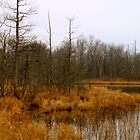 Timberland Lake - Late Fall by Joy Fitzhorn