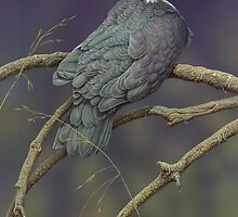 Joby Island Dove by Christopher Pope