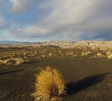 Near Ubehebe Crater, Death Valley by Claudio Del Luongo
