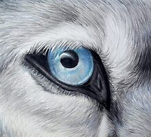 Icy Glance - Silver Gray Wolf Blue Eye Colored Pencil Drawing Painting by AmandaUlfrica