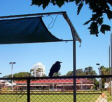 Crow On A Shade Cloth - 15 12 12 - Five by Robert Phillips