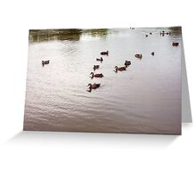 Duck V-Formation - 13 12 12 Greeting Card