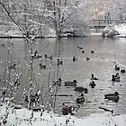 Duck Pond In Winter by herbspics