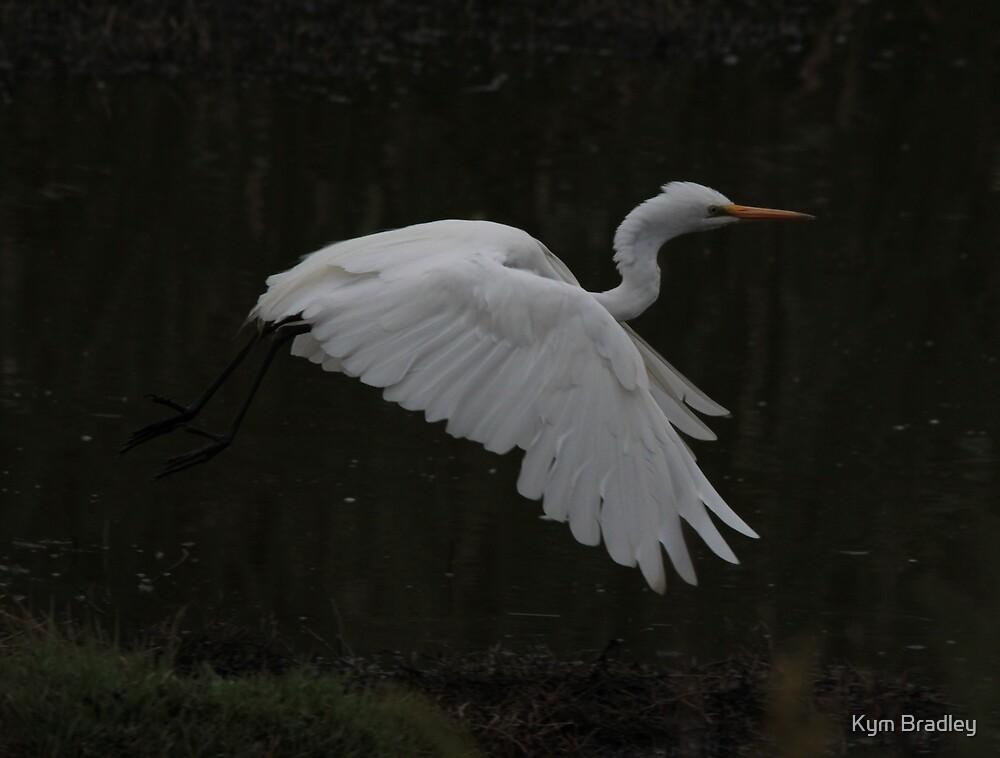 Twilight Flight Egret by Kym Bradley