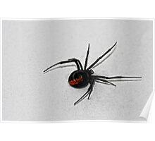 Redback spider Poster