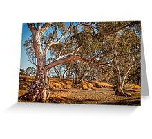 River Red Gums - Stephens Creek Greeting Card