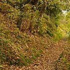 A Leafy Lane by TREVOR34