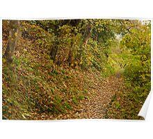 A Leafy Lane Poster