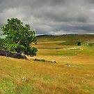 Old Wall and Tree by jul-b