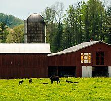 Kentucky Barn Quilt - 1 by Mary Carol Story