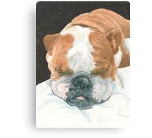 Sleeping Bulldog Canvas Print