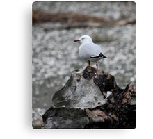 Seagull On Driftwood Canvas Print