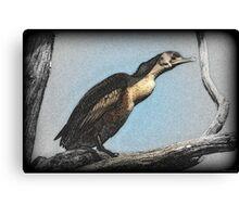 Cormorant Art  Canvas Print