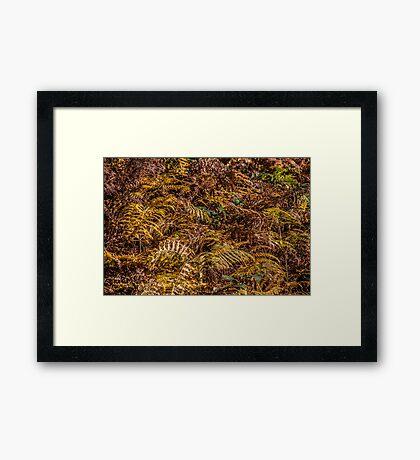 Autumnal Fern Framed Print