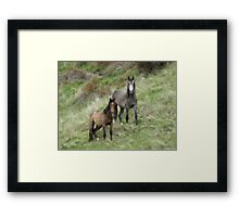 Mare And Her Yearling Framed Print