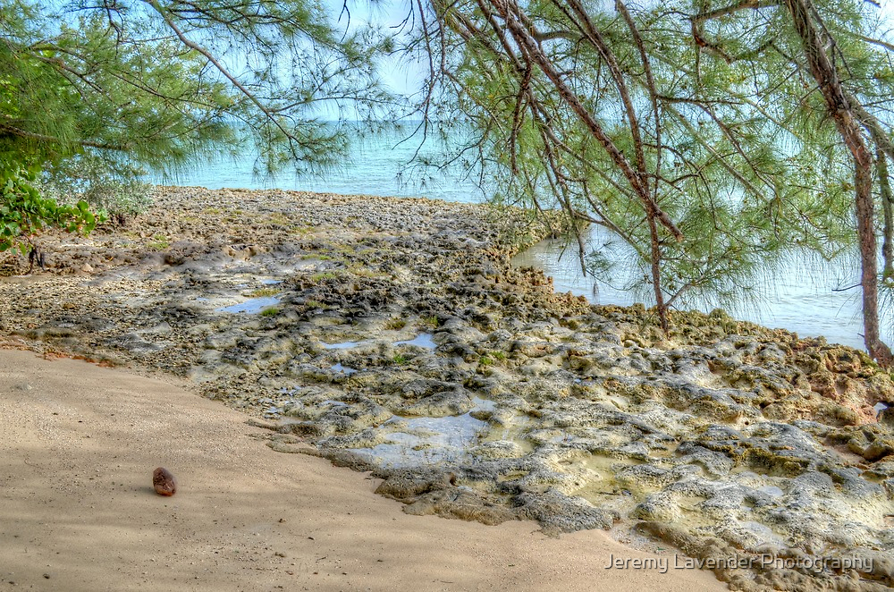Lonely Coconut on the Beach in Nassau, The Bahamas by Jeremy Lavender Photography