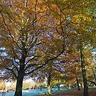 Autumn Aspect by StephenRB