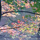Autumn colors on Greenbelt Lake by nealbarnett