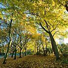 Autumn Avenue by StephenRB