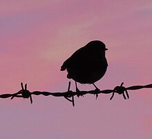 Bird on a Wire by rubyrainbow