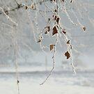 Frost by Mojca Savicki