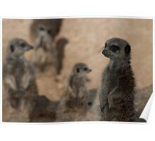 Meerkat Mob Poster