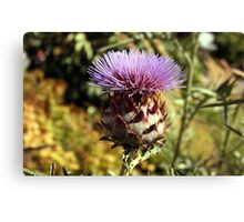 Large Thistle Plant Canvas Print