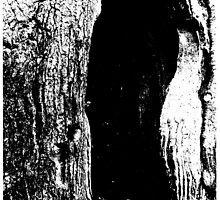 Tree hollow black and white photograph by pegged-out